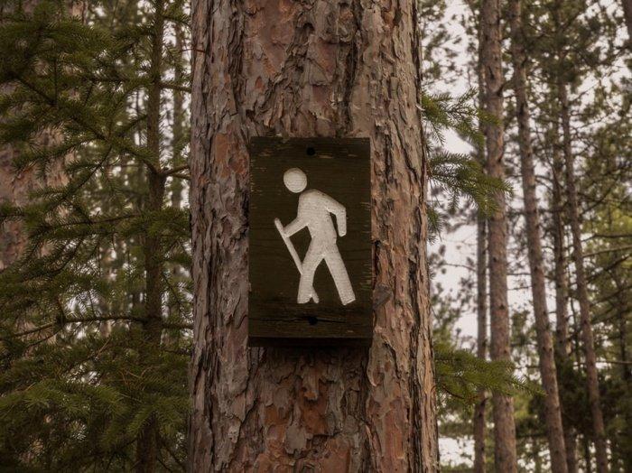 По словам кардиолога, 15 минут мало: для достижения максимального эффекта нужно не меньше часа прогулок