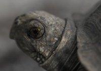 Найден панцирь самой огромной в мире черепахи