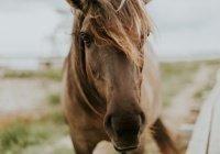 В Англии лошадь нашла у женщины смертельную болезнь