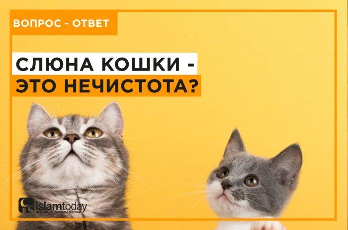 Правда ли, что слюна кошки - это нечистота? (Источник фото: freepik.com)