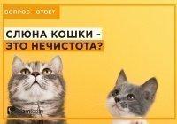 Почему кошку можно держать дома, это же хищник?