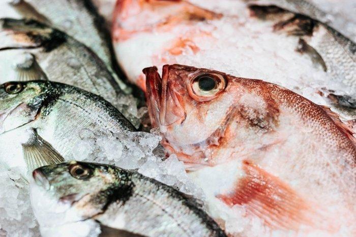 К подобной рыбе специалист причислил тилапию, пангасиус, дорадо, сибас