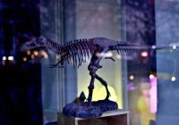 У вымершего вида динозавров найден современный рак