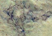 В Китае нашли водоросль возрастом больше миллиарда лет