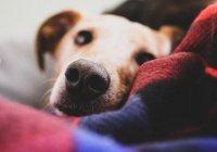 В США собака спасла хозяина от смерти во сне
