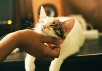 Обнаружено, какая музыка успокаивает кошек