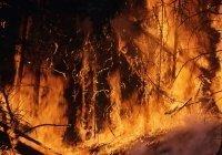 Перечислены регионы с наибольшей пожароопасностью