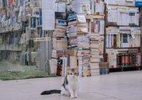 В Тверской области кота взяли на работу в библиотеку