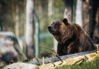 Стало известно, что делать при встрече с диким медведем