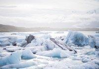 Специалисты изучат продолжительность жизни в Арктике