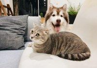 Оценена вероятность заразиться коронавирусом от кошки и собаки