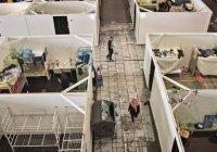 Германия прекращает прием беженцев