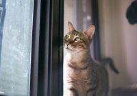 В Бельгии хозяин заразил коронавирусом свою кошку