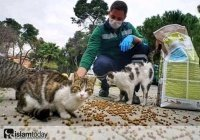 Как выживают уличные животные во время карантина? (ФОТО)