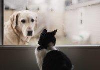 Оценена опасность заражения COVID-19 от домашних животных