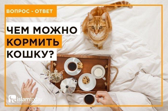 Чем можно кормить кошку? (Источник фото: freepik.com)