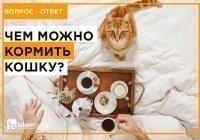 """Можно ли кормить котов кормом из магазина, ведь там """"нехаляльное"""" мясо?"""
