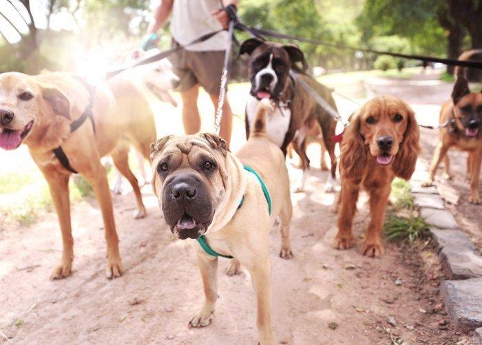 Жителям Узбекистана разрешили выгуливать собак только раз в день.