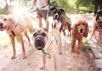 В Узбекистане регламентировали выгул собак