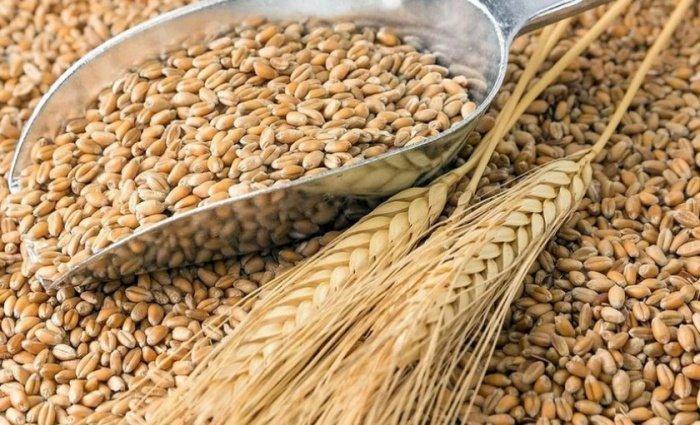 Саудовская Аравия получит первую партию российской пшеницы.