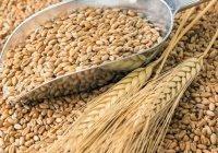 Россия отправила в Саудовскую Аравию первые 60 тонн пшеницы