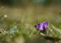 Обнаружено, от чего зависит изменчивость погоды весной