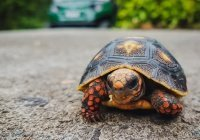 Жительницу Италии оштрафовали за выгул черепахи