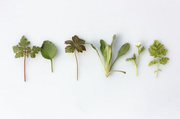 Травы, по словам эксперта, особенно эффективны на начальном этапе лечения либо при профилактике