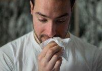 Выявлена схожесть сезонной аллергии и коронавируса
