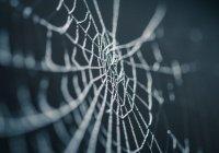 В Китае паук сплел паутину в ухе пенсионерки
