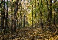 В 65 регионах России запретили посещать леса