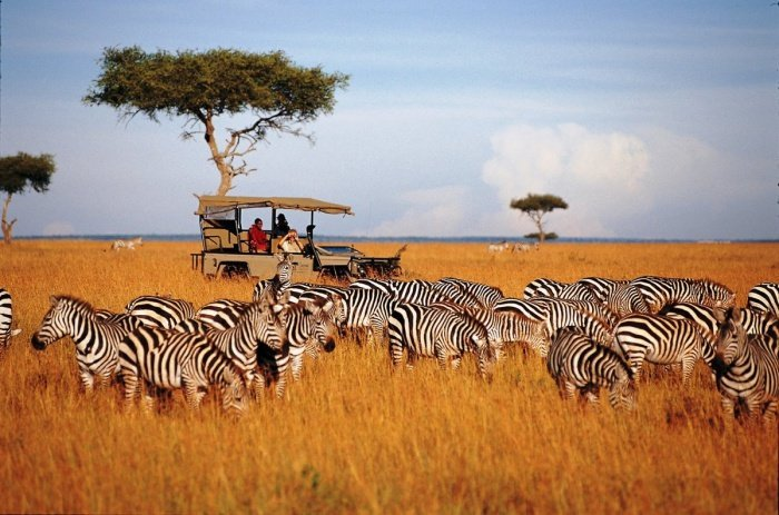 Коронавирус может привести к краху туризма в Африке.