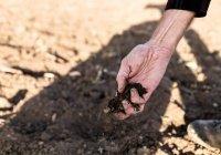 Гидрометцентр сообщил об угрозе засухи в регионах