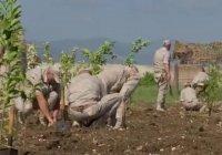 В Сирии высадили 75 деревьев в память о ветеранах ВОВ