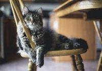 В Испании найден первый кот, зараженный COVID-19