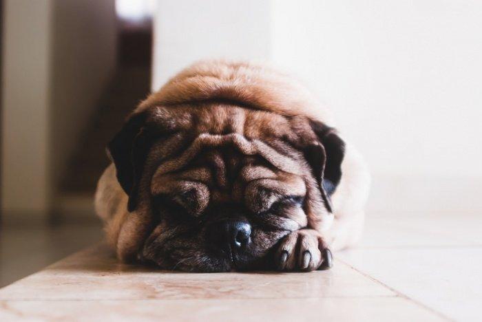 Медик призвал не иметь дела с людьми, которые плохо обращаются с животными