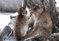 Вакцина от коронавируса испытана на макаках