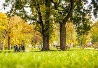 Россиянам напомнили об опасности прогулок в парке