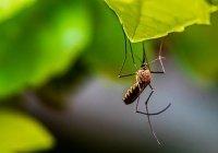 Выяснилось, можно ли заразиться коронавирусом от насекомого