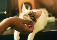Вирусолог прокомментировал случай COVID-19 у кошки
