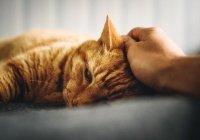 Роспотребнадзор оценил возможность заразиться COVID-19 от кошки