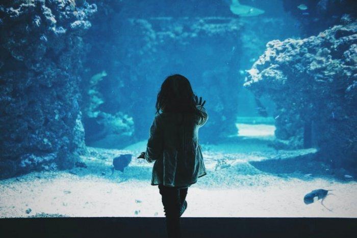 В условиях океанариума опасность подхватить вирус от человека у животных серьезно повышается. Возможна также и обратная передача