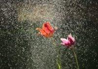 Как Священный Коран раскрывает секреты обычного дождя
