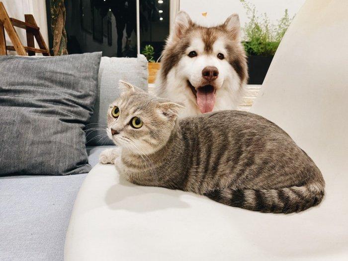 По словам специалистов, заболеванию подвержены наиболее популярные домашние животные – собаки и кошки
