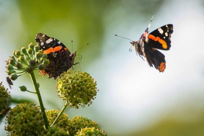 Биологи обнаружили, что крылья насекомых обладают особой структурой