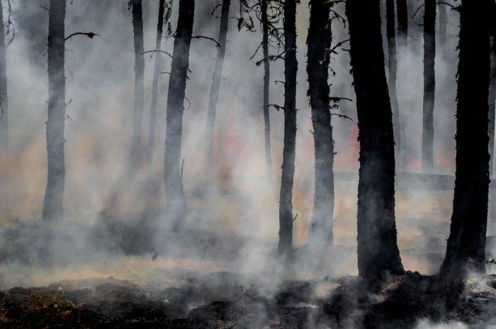 Особый противопожарный режим действует на всей территории 35 субъектов, в 16 – частично