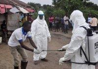 В Африке число заразившихся коронавирусом перевалило за 256 тысяч