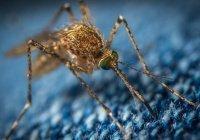 Россиян предупредили об опасности комариных укусов