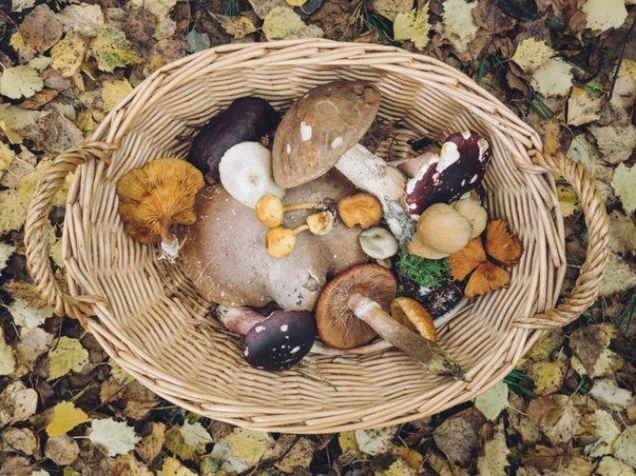 Готовить грибы надо в день сбора, так как они быстро портятся
