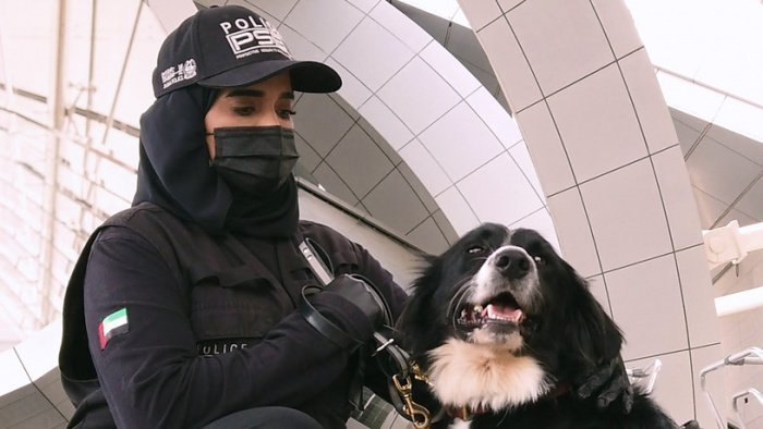 Служебные собаки будут помогать выявлять коронавирус.